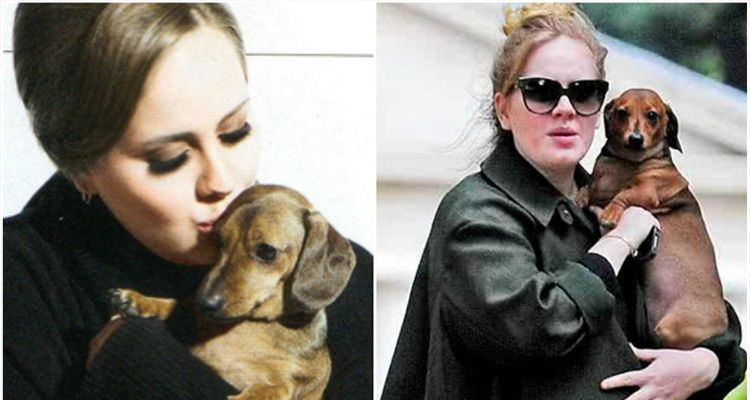 اديل مع كلبها adele with her dog